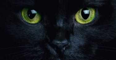 siyah-rengin-psikolojisi